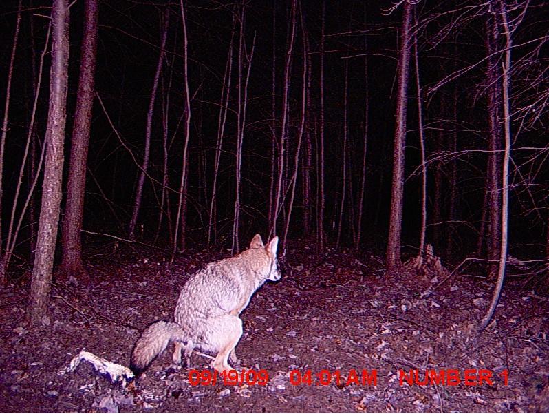 09-trail-cam-animals-funny-when-humans-arent-around.jpeg.jpg