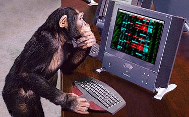 353-nyse-chimp.jpg