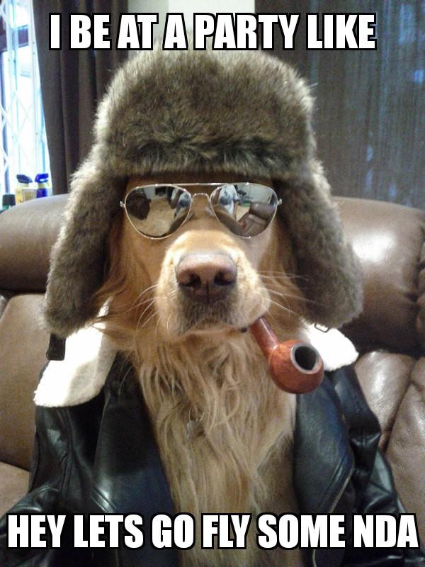 Aviator Dog 15072017185252.jpg