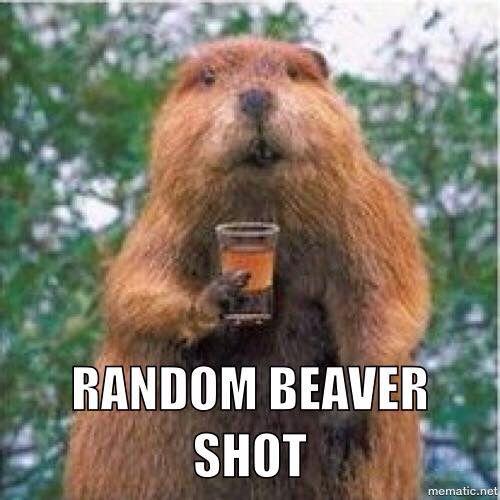 Beaver shot.jpg