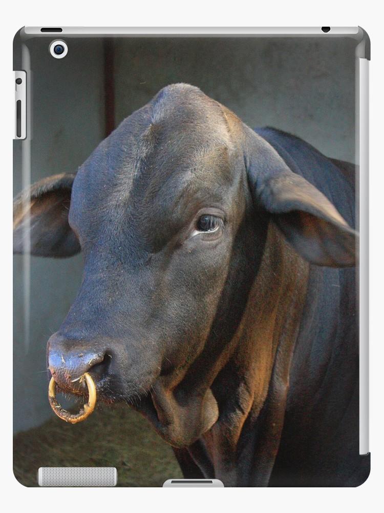 Cow Nose ring.jpg