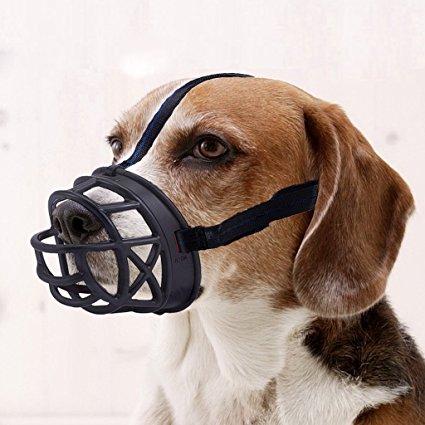 muzzle.jpg