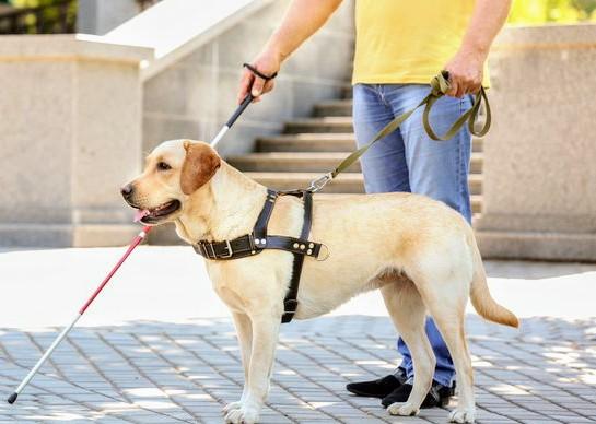 Seeing-Eye-Dog-Adoption-4~2.jpg
