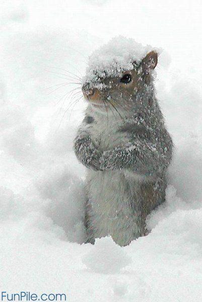 squirrel_snow.jpg